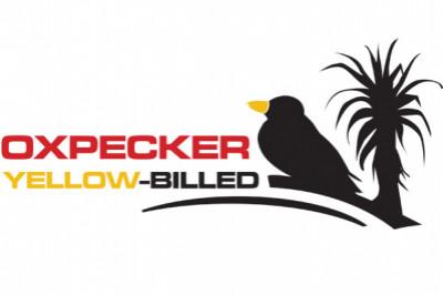 Yellow Oxpecker Physio